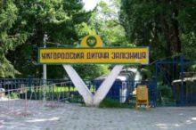 Боржавська вузькоколійка та Ужгородська дитяча залізниця відкривають туристичний сезон