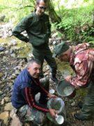 У гірські річки Міжгірщини запустили 12 тисяч мальків форелі