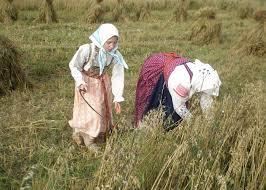 ЖНИВАРСЬКІ ЗВИЧАЇ в околицях між Ужгородом і Мукачевом