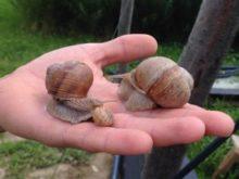 Ікру равликів дегустували в Нижньому Селищі