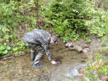 Ще 12 тисяч мальків форелі оселилися в річках Рахівщини