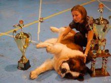 В Ужгороді відбулась міжнародна виставка собак