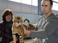В Ужгороді відбулося котяче свято…