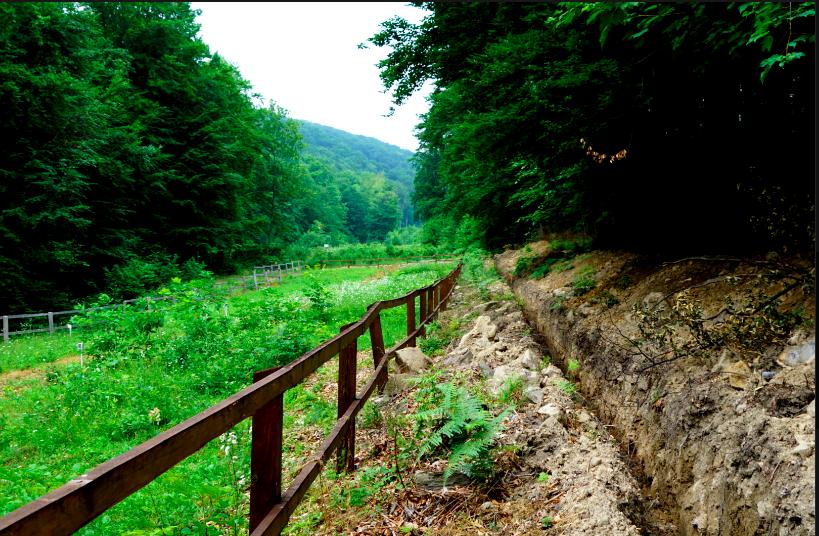 Лісівники Ужгородщини запрошують побачити зелений «дитячий садок»
