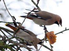 У «Синевирі» спостерігатимуть за птахами