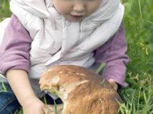 Перші весняні білі делікатеси з'явилися у лісах Свалявщини