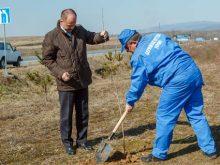 У вівторок під час весняної толоки обабіч дороги Ужгород—Мукачево висадили тисячу молодих ліщин