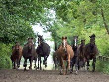 На Великоберезнянщині кінні перегони  зберуть вершників з усієї України та близького зарубіжжя