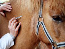 Працівники Ясінянського лісомисливгоспу врятували… коня