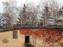 У селі Холмовець дерева ростуть просто на даху будинку