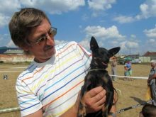 В Хусті відбулась міжнародна виставка собак