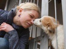 В Ужгороді запрацював притулок для тварин. Нині там утримується 35 собак