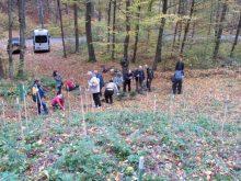 Словацькі дипломати допомагали ужгородським лісівникам садити новорічні ялиці