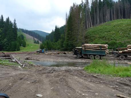 Москаль: «Порівняно з 2015 роком вирубка лісу на Закарпатті зменшилася на 15 відсотків»