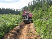 Ліси Міжгірщини допомагають боронити від пожеж мінералізовані смуги