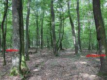Спека та відсутність дощів – чому Закарпаття може залишитись без дерев