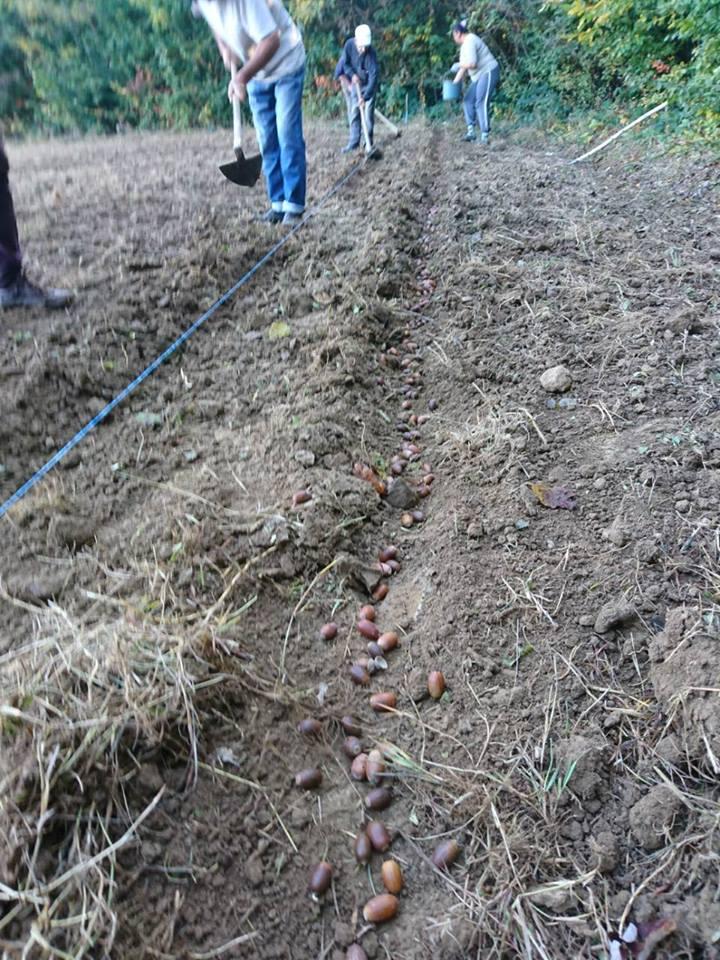 Лісівники Довжанського лісомисливгоспу зібрали 5 тонн насіння