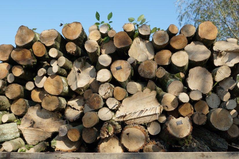 Чи легально возять дрова на Берегівщині?