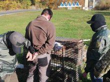 На Рахівщині затримали контрабандиста, який намагався підкупити прикордонника