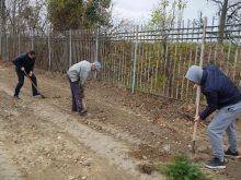 Процес озеленення почали на стадіоні «Авангард» в Ужгороді