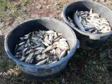 У Виноградівському районі в ставок вселили близько 5 тонн цінних промислових видів риб