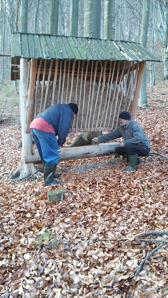 Лісівники Березнянщини розпочали підгодівлю диких тварин