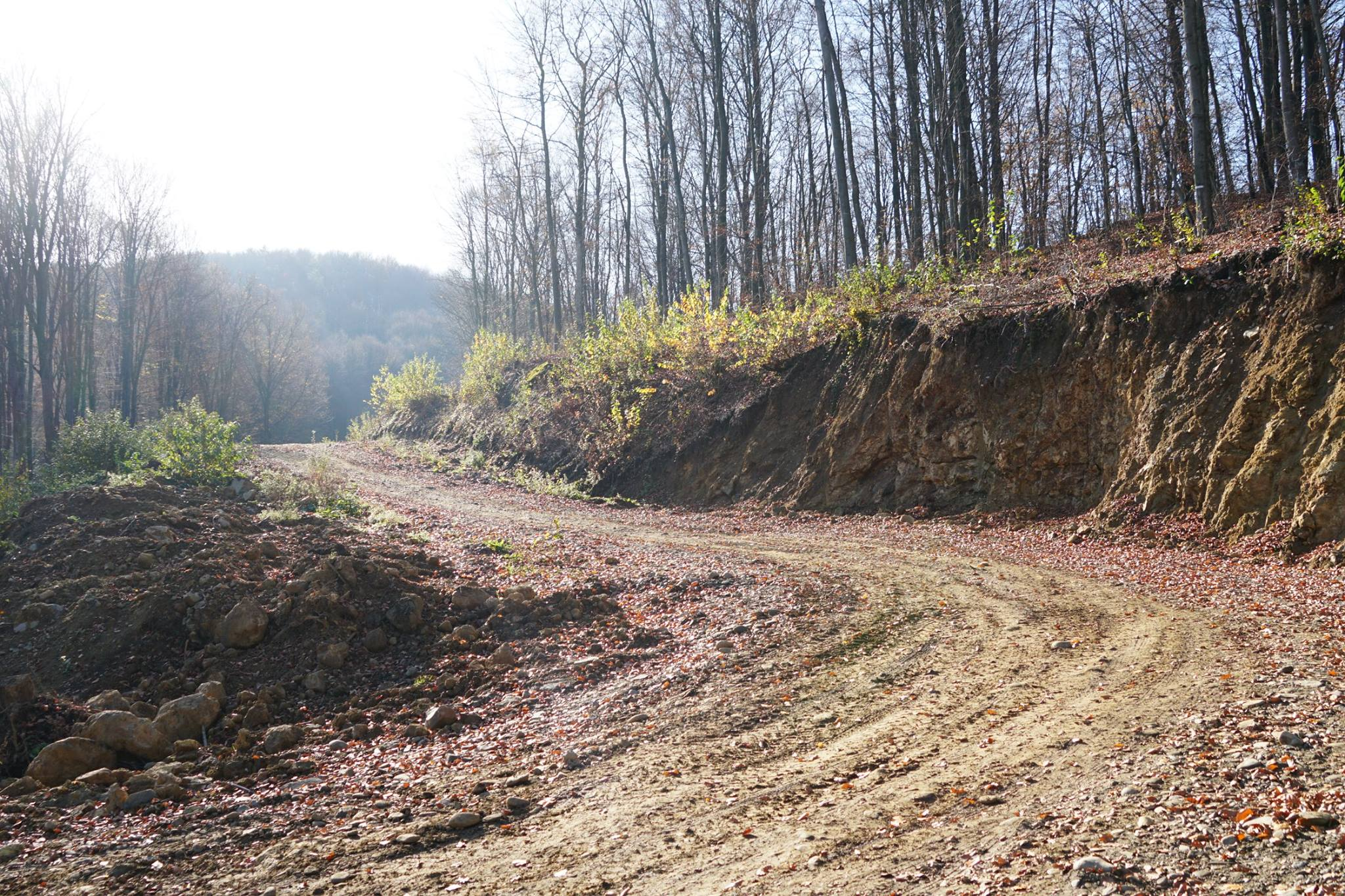 Лісівники Перечинщини відремонтували лісову артерію