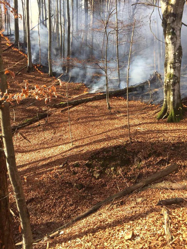 На Тячівщині горів ліс