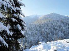 Понад 200 об'єктів природно-заповідного фонду виокремили на Закарпатті