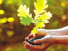 Молоді деревцята на Берегівщині садили разом зі школярами