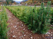 Розсадники – «колиска» лісу. Їх в області є 153, конкурс визначив найкращі