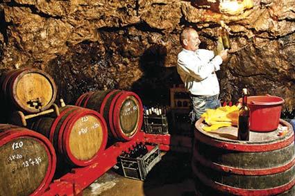 Нашим виноробам полегшили життя