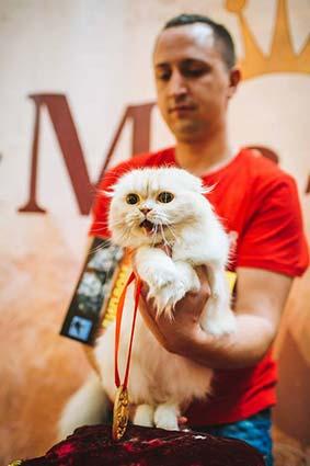 Титул «міс-кіс-2016» взяв кіт Гурем