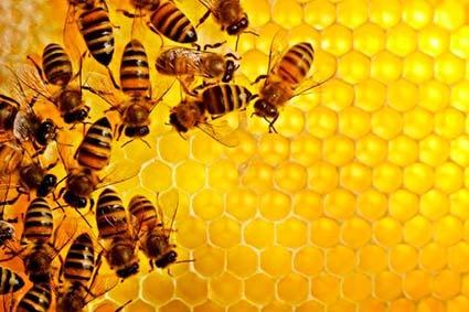 Цікаві факти про бджіл та мед