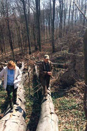 Фахівці «Львівлісозахисту» Провели обстеження «зелених легенів» перечинщини щодо ушкодження вітровалами